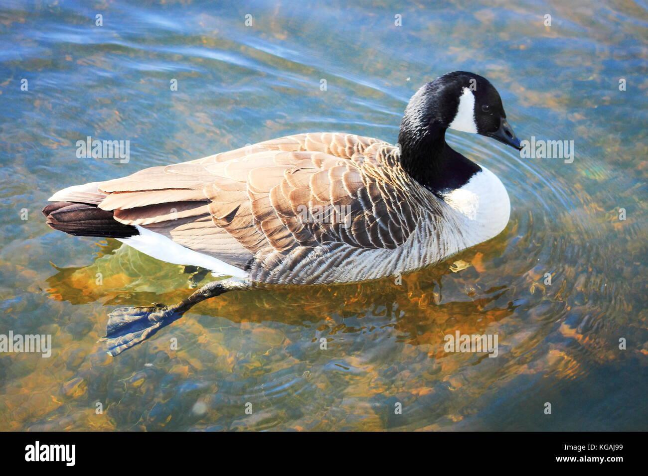 buy canada goose nz