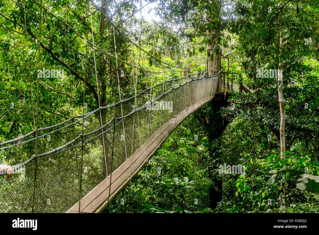 Mulu National Park - Canopy Walk & Mulu National Park - Canopy Walk Stock Photo Royalty Free Image ...