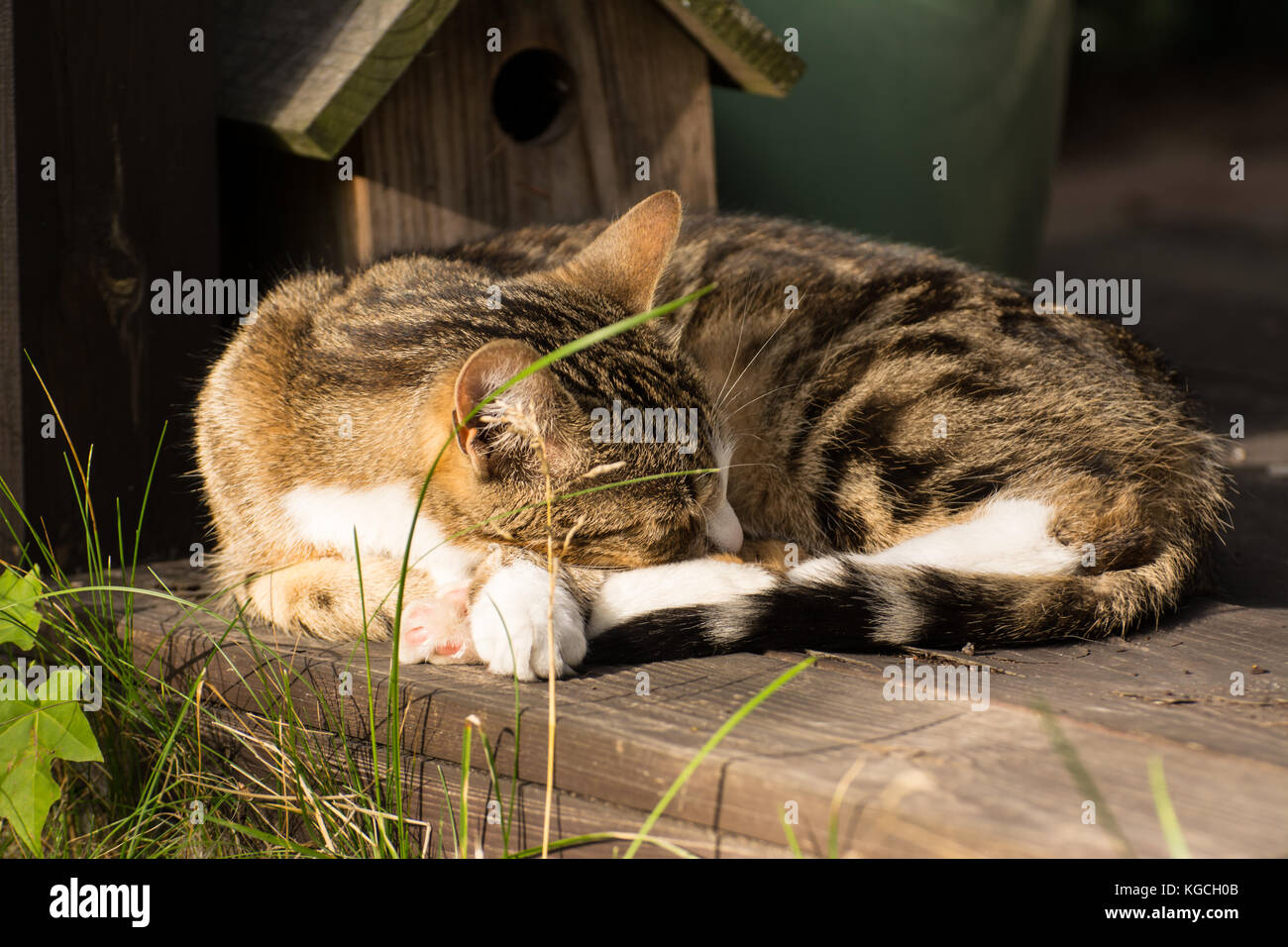 Cute Little Cat Curled Up, Resting In A Garden Shed