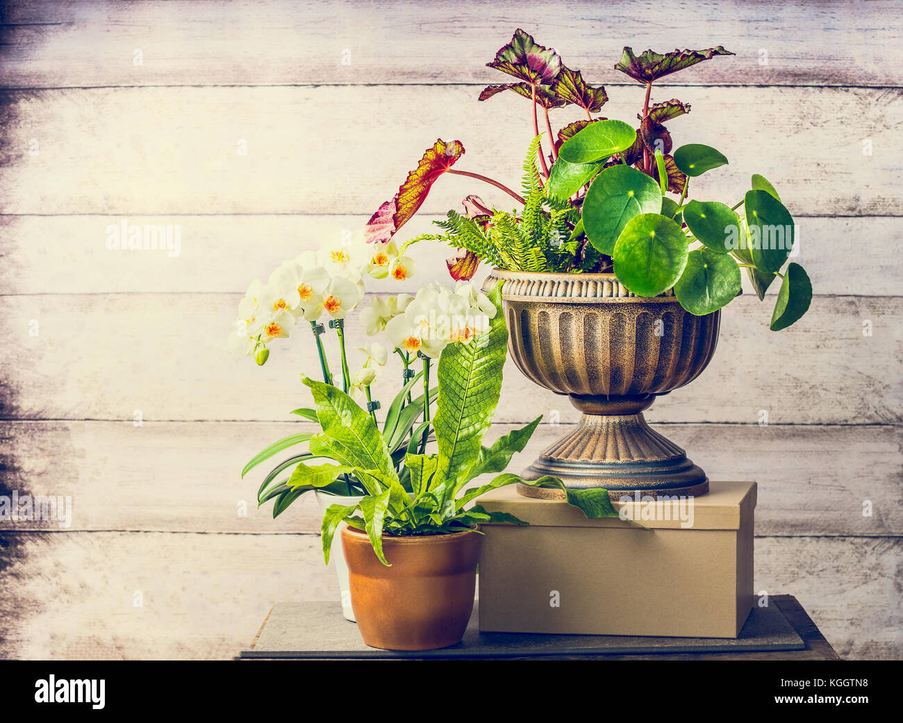 Pretty plants and orchid flowers for indoor container gardening ...