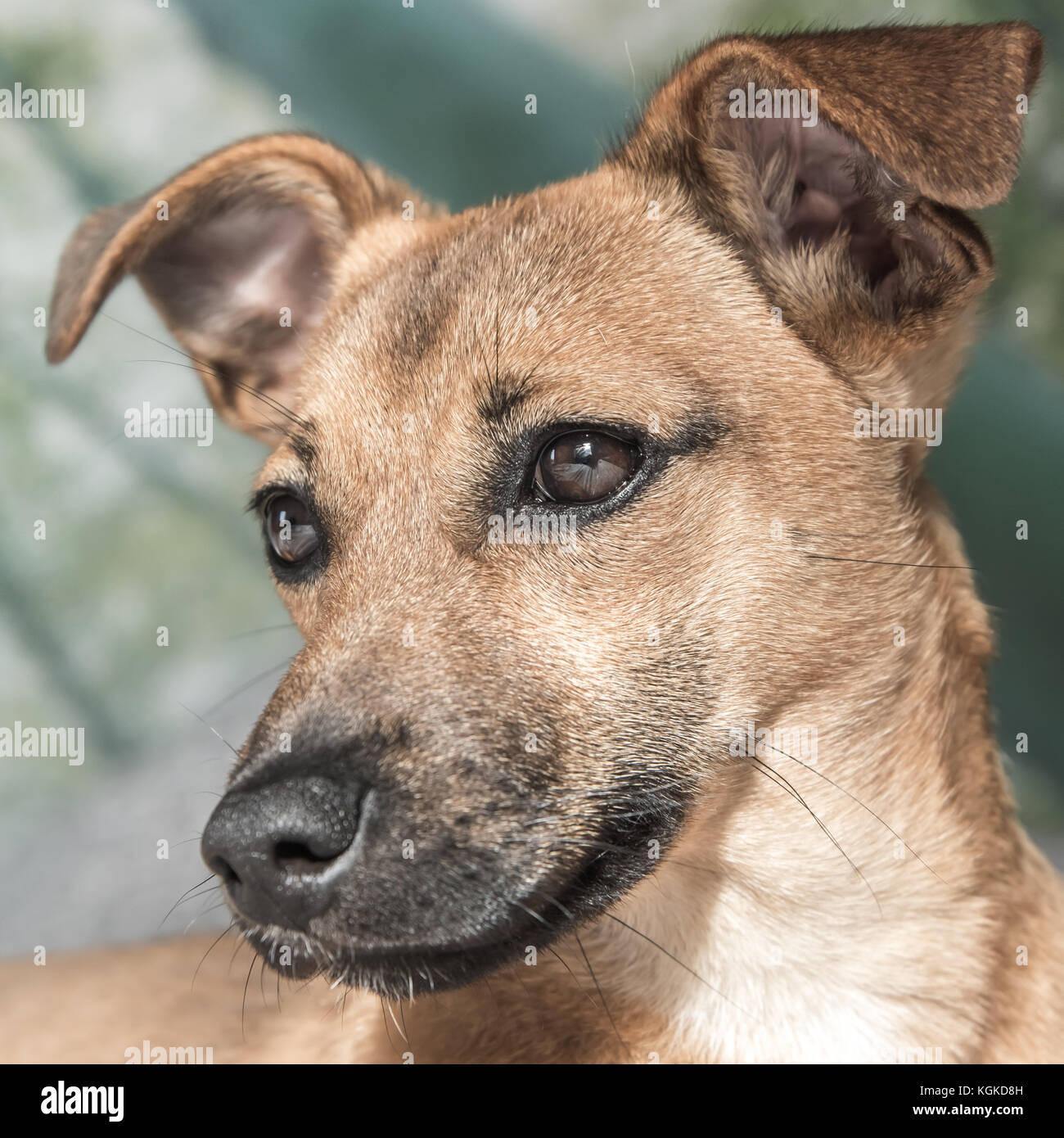 Beautiful Dog Cute Puppy Stock Photo 165155329 Alamy