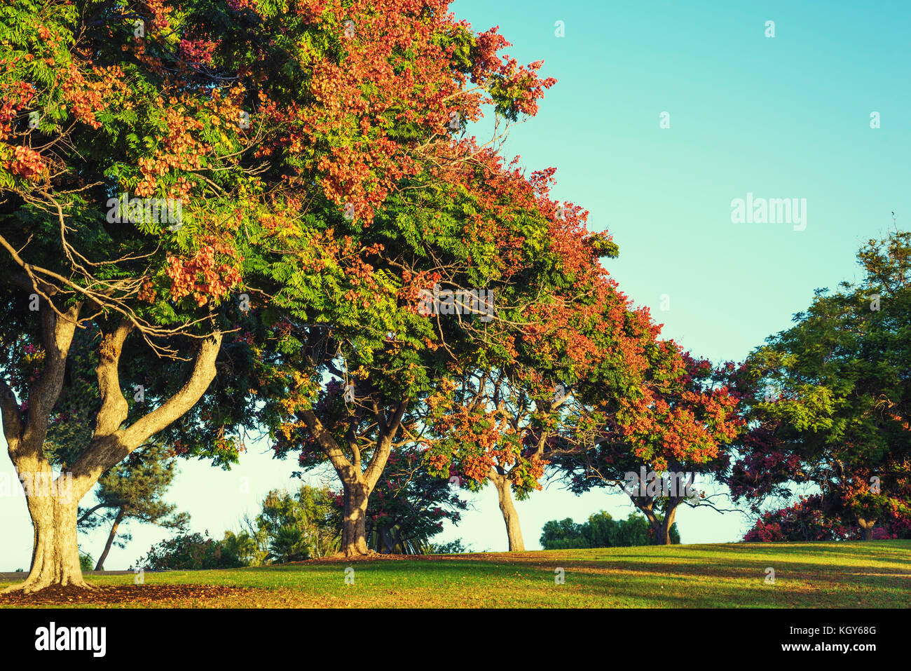 Colorful trees photographed in fall in a park setting Stock Photo ...
