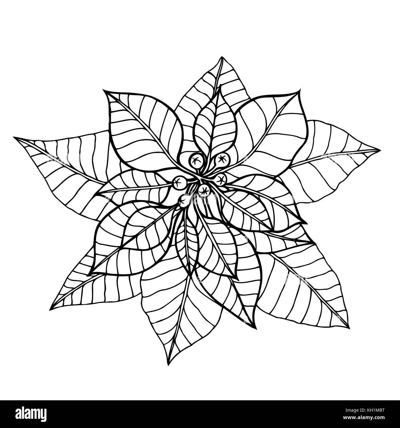 hand drawn vector illustration poinsettia christmas flower