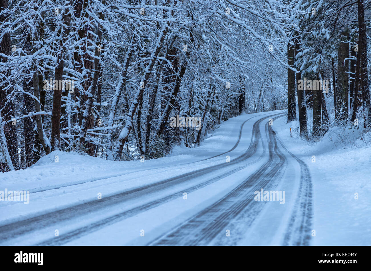 Fresh new snow covered the trees and the road after an early spring snow storm, Yosemite National Park, California, Stock Photo