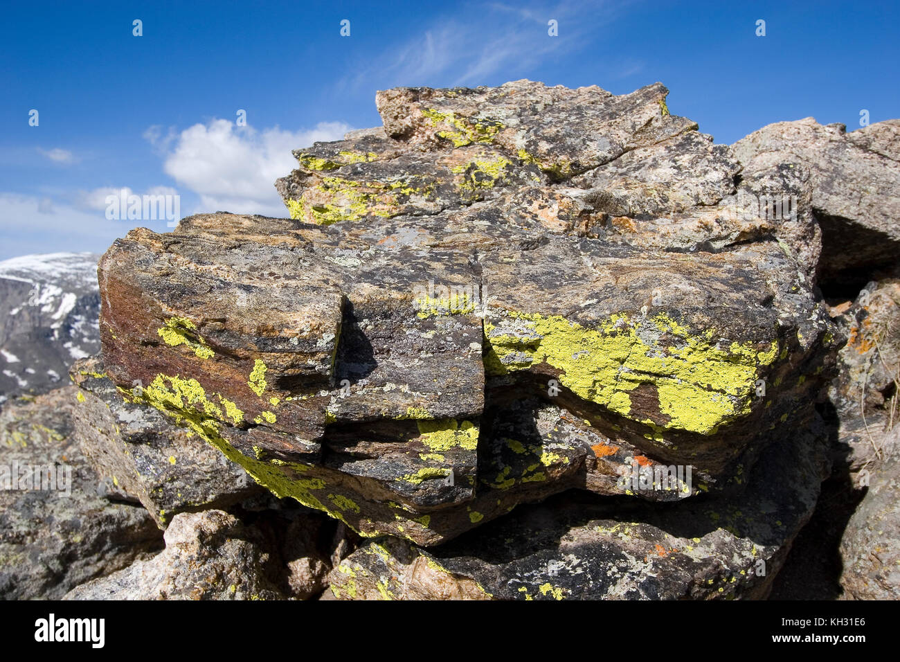 Lichens on rock at 12110 feet elevation rock cut rocky mountain lichens on rock at 12110 feet elevation rock cut rocky mountain national park colorado sciox Image collections