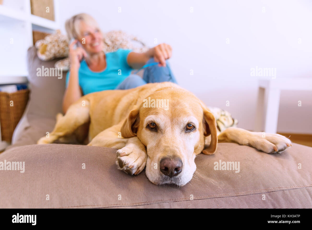 Mature pet furniture
