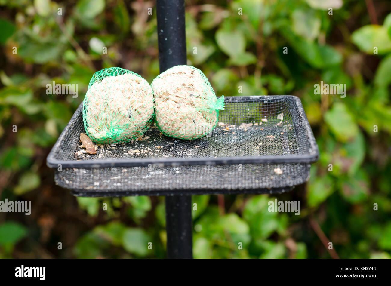 how to make bird food fat balls