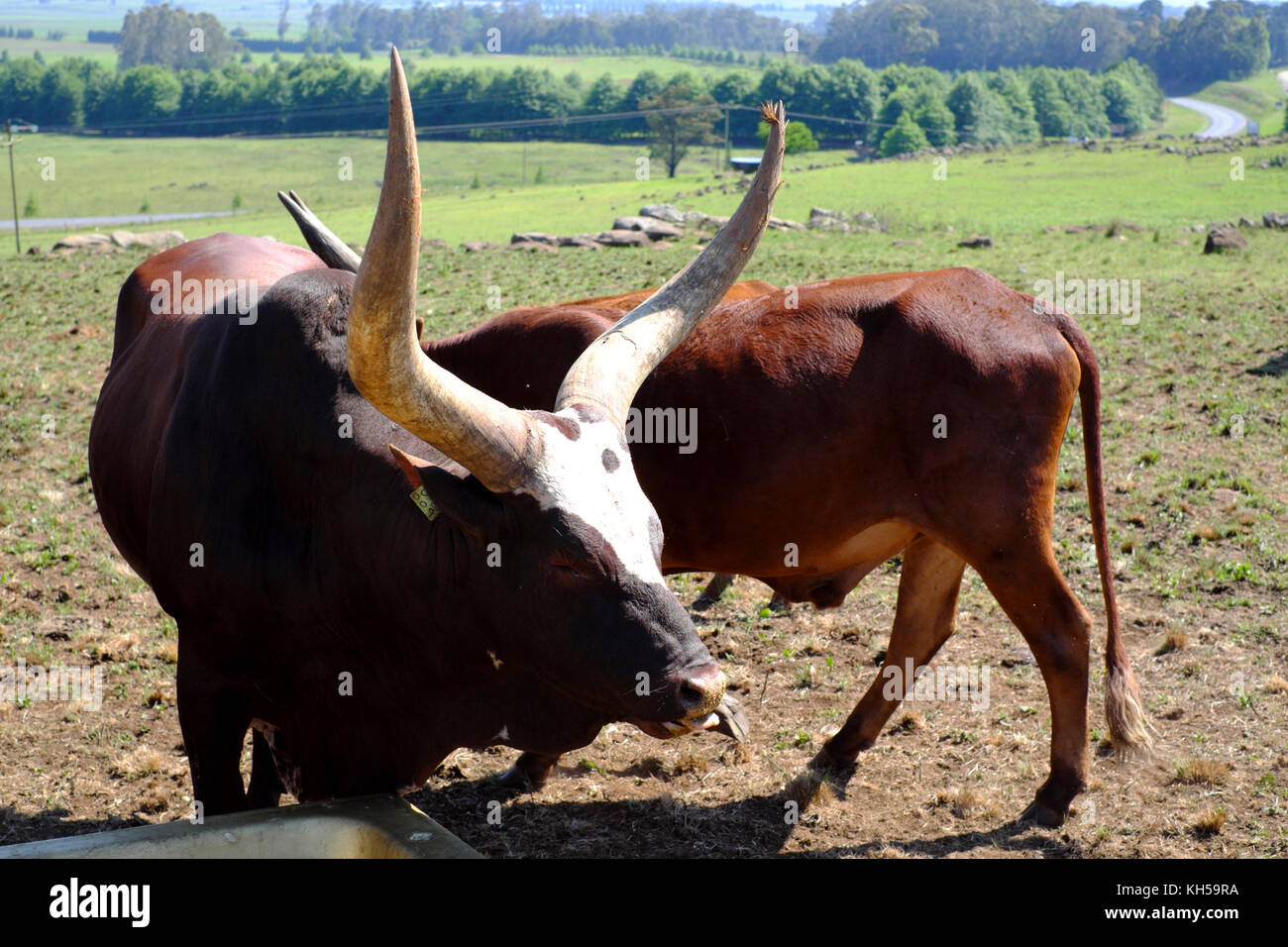 how to start a cattle farm in south africa