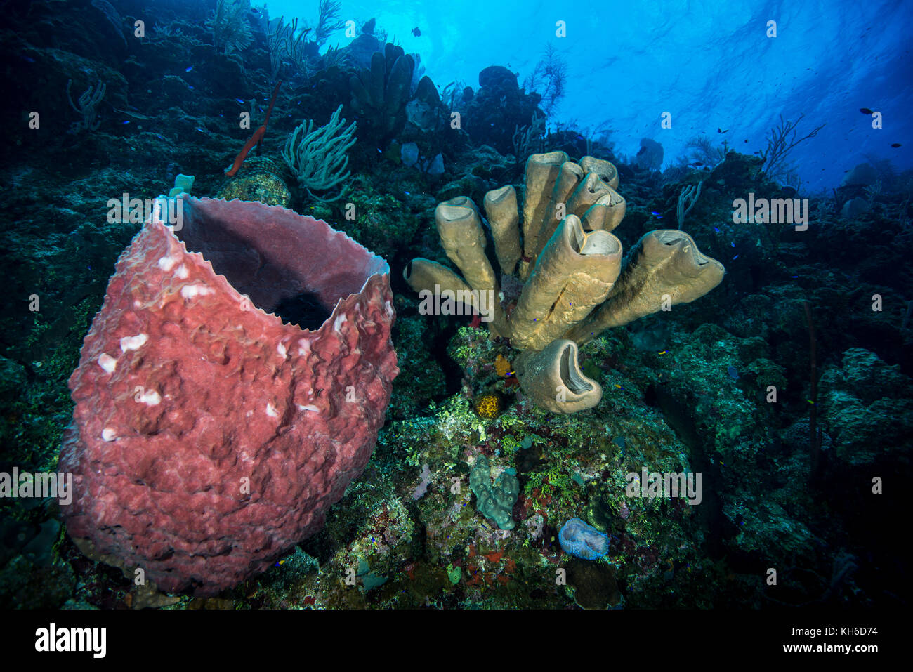 Marine sponge stock photos marine sponge stock images alamy underwater seascape and marine sponge at little cayman stock image reviewsmspy