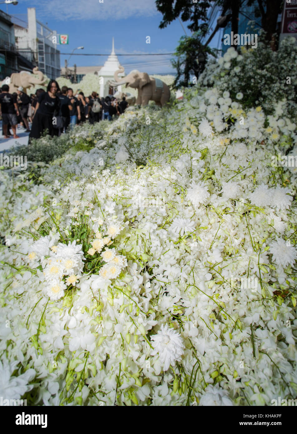 thailand bangkok orchid flowers stock photos u0026 thailand bangkok