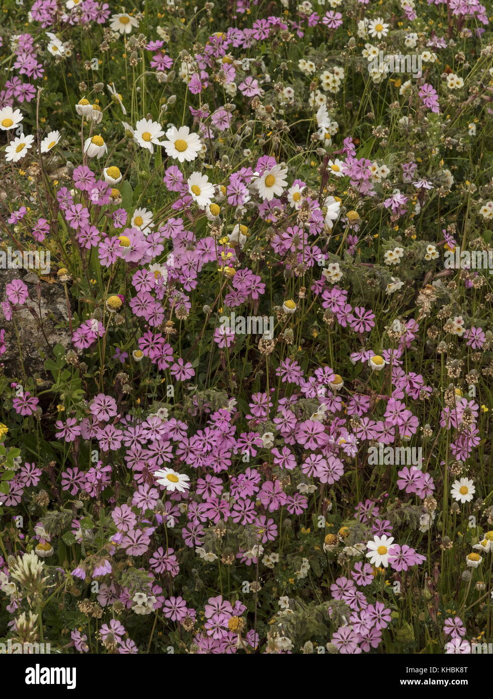 Flowers pink wildflowers greece stock photos flowers pink wildflowers greece stock images alamy - Flowers native to greece a sea of color ...