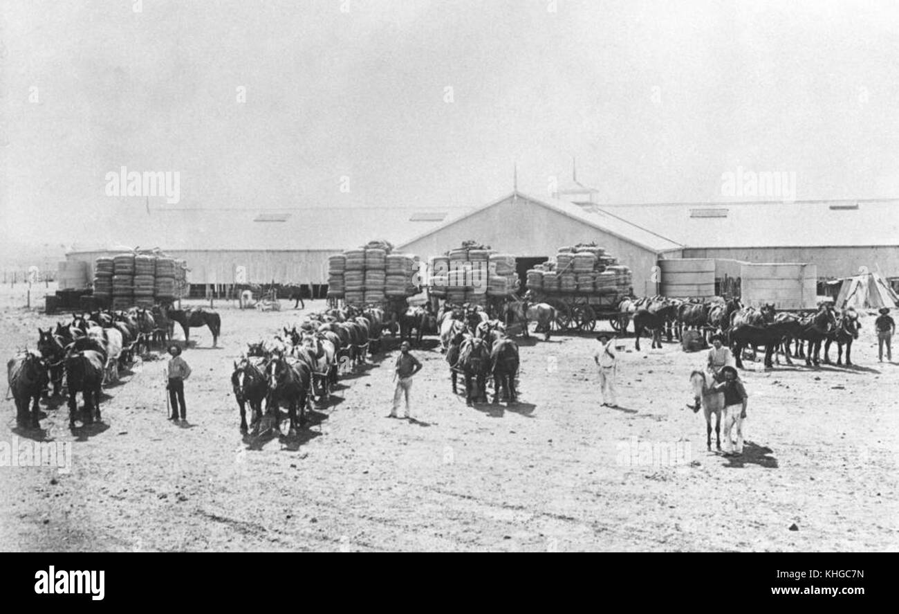 1 153299 Horse teams ready to move out with their loaded wool wagons,  Brenda Station, ca. 1890