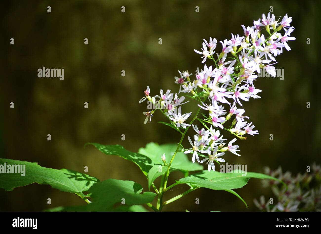 Yellow And Black Butterfly On Small Purple Flower Cluster With