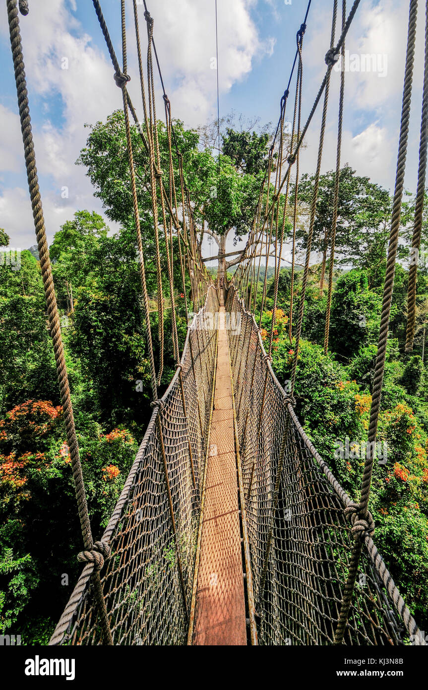 Canopy Walkway in Kakum National Park. A 375 square km national park located in the Central Region of Ghana. Kakum National Park has a long series of & Canopy Walkway in Kakum National Park. A 375 square km national ...