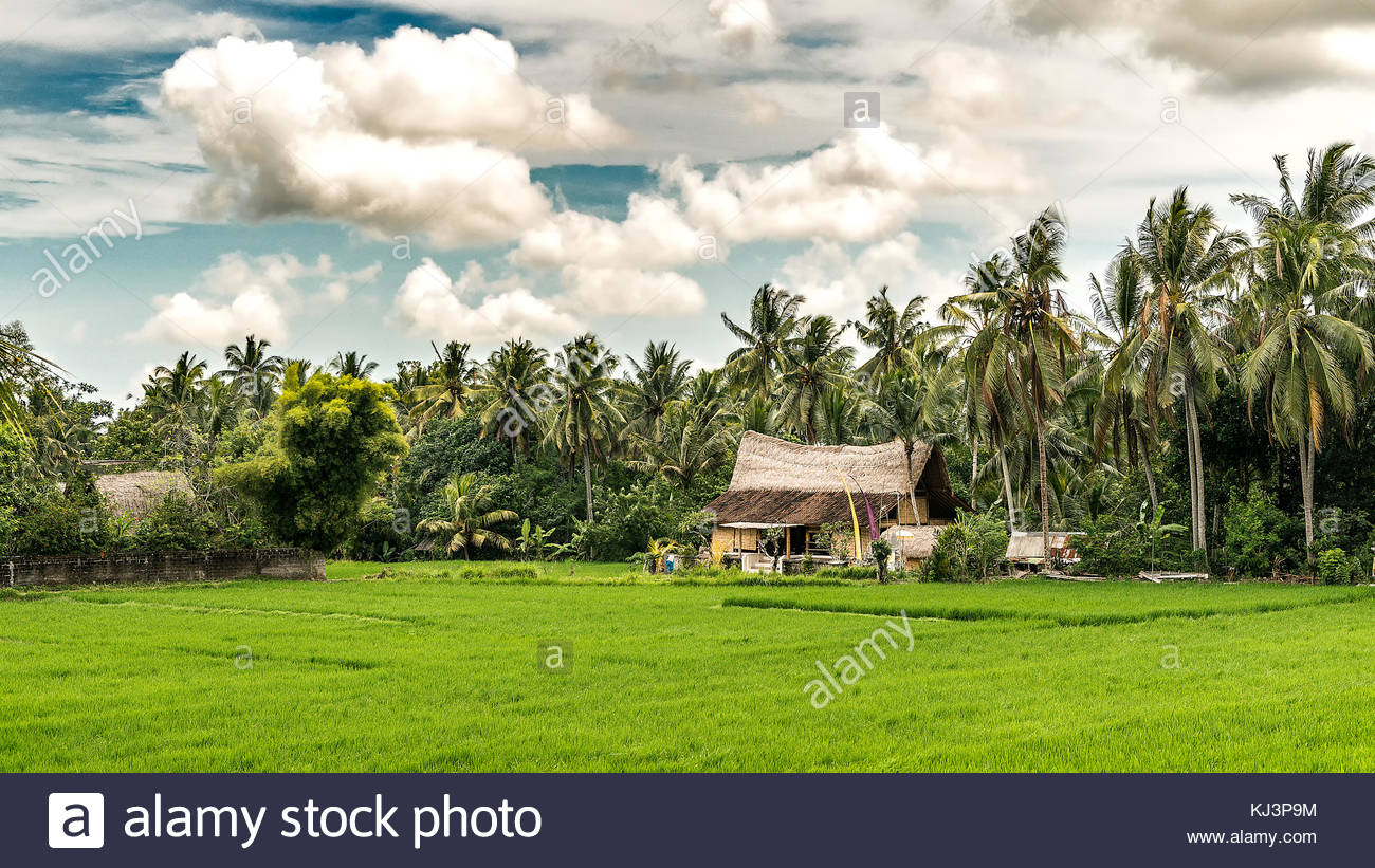 Balinese Traditional House Architecture With Beautiful Sky And Rice Field  In Bali. Indonesia. Ubud