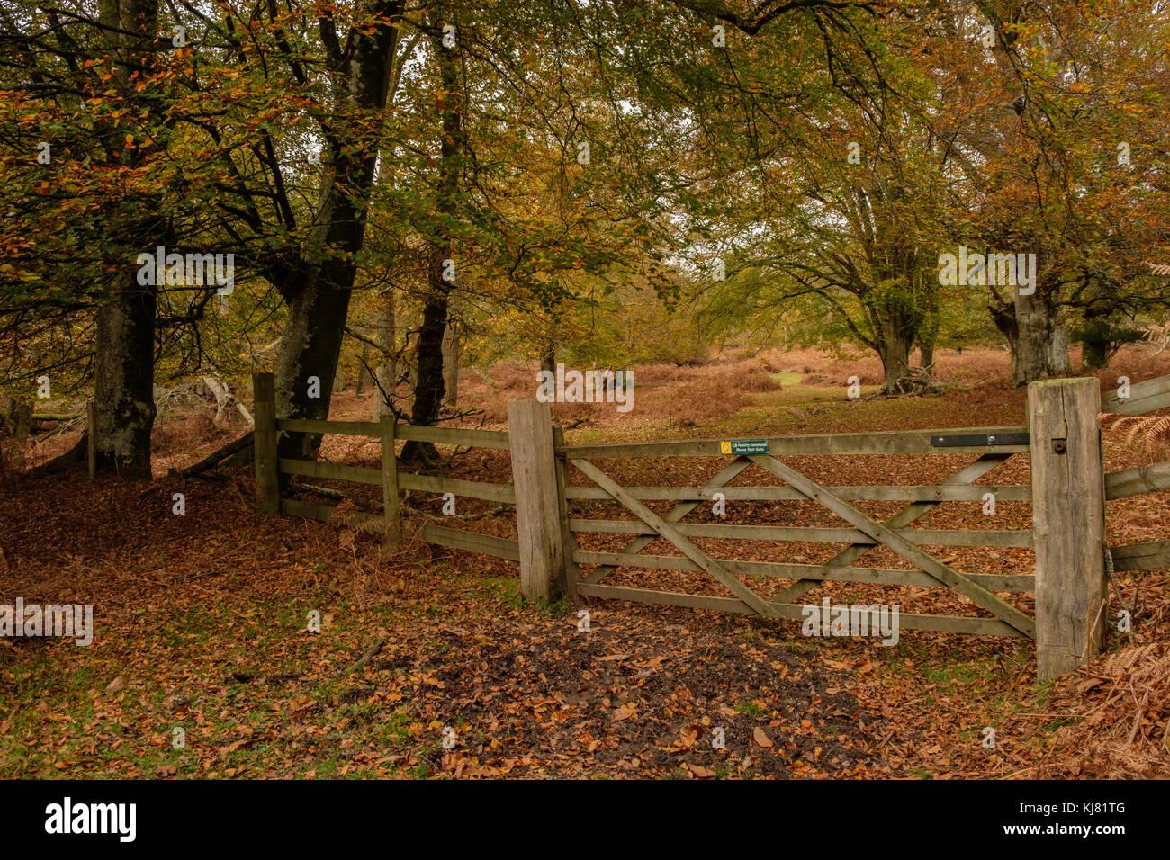 wood ash stock photos u0026 wood ash stock images alamy