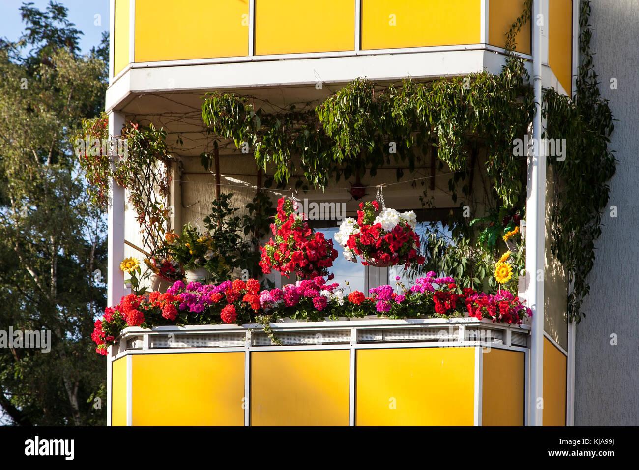 Schöner Wohnen Balkon blütenmeer auf dem balkon / schöner wohnen stock photo: 166183966
