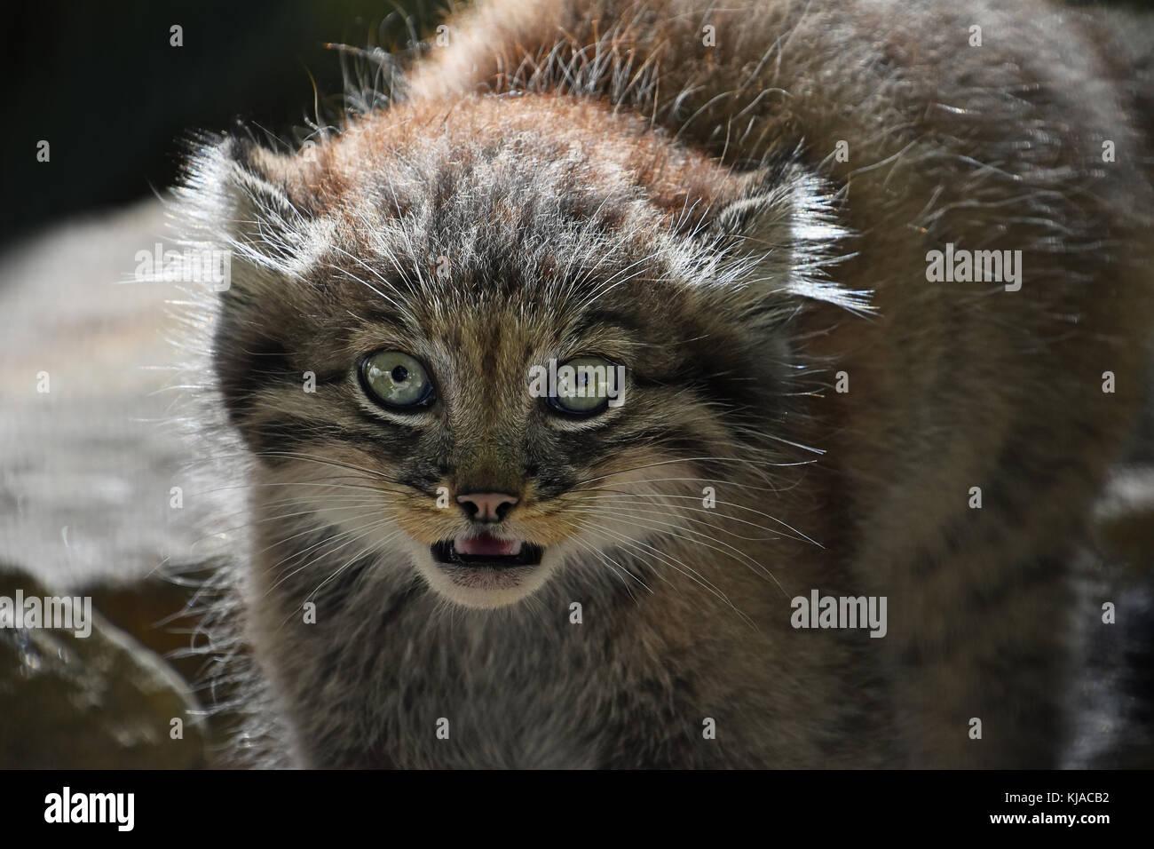 walmart cat flea medicine