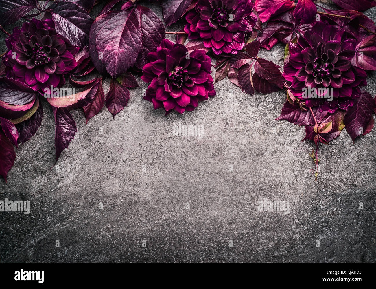 dark purple floral border with flowers petal and leaves on gray