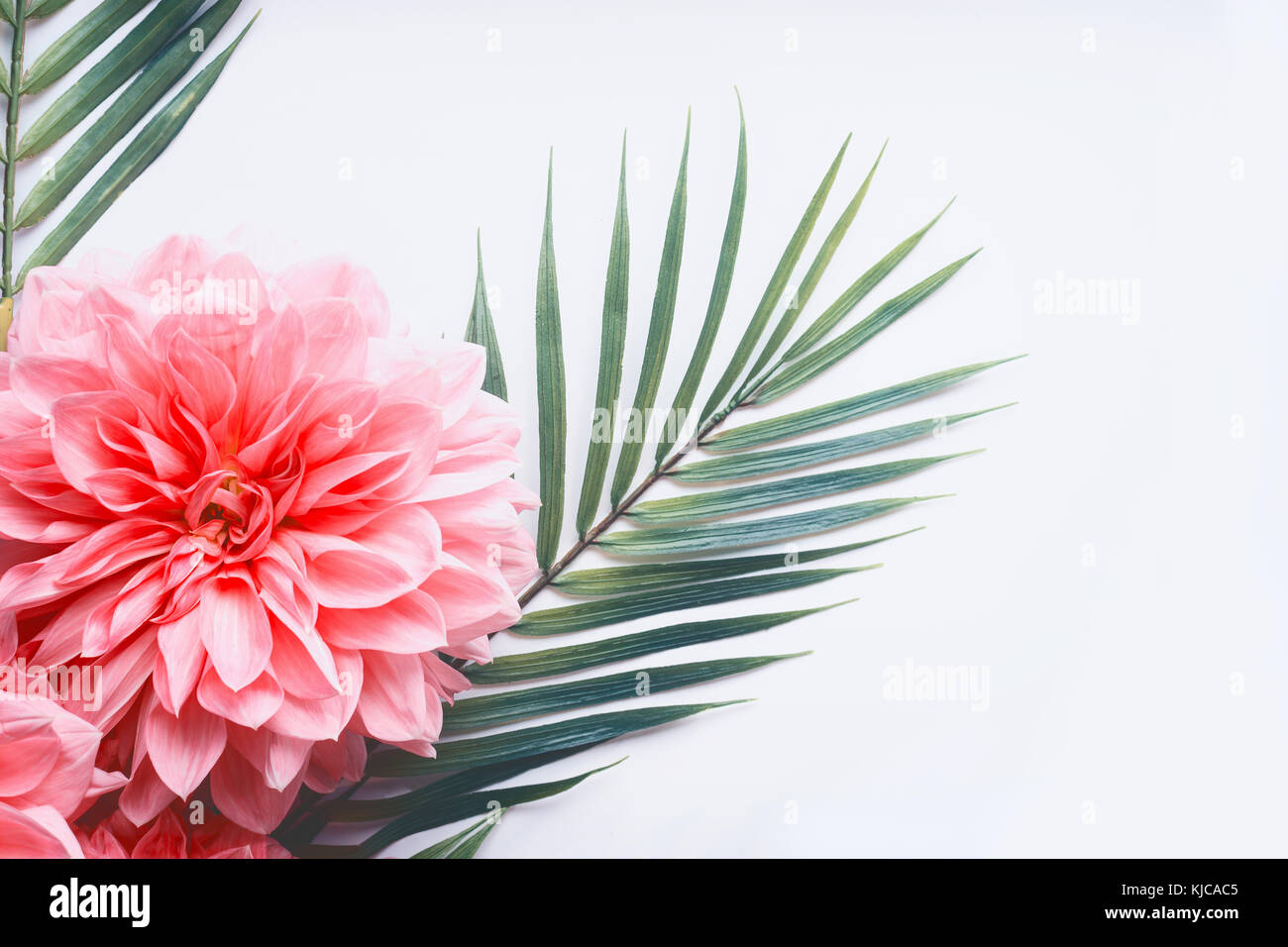 Pink flowers and tropical leaves on on white desktop background top pink flowers and tropical leaves on on white desktop background top view creative layout with copy space border close up mightylinksfo