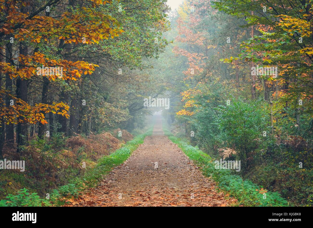 Beautiful autumn landscape. Road with colorful trees in the forest ...
