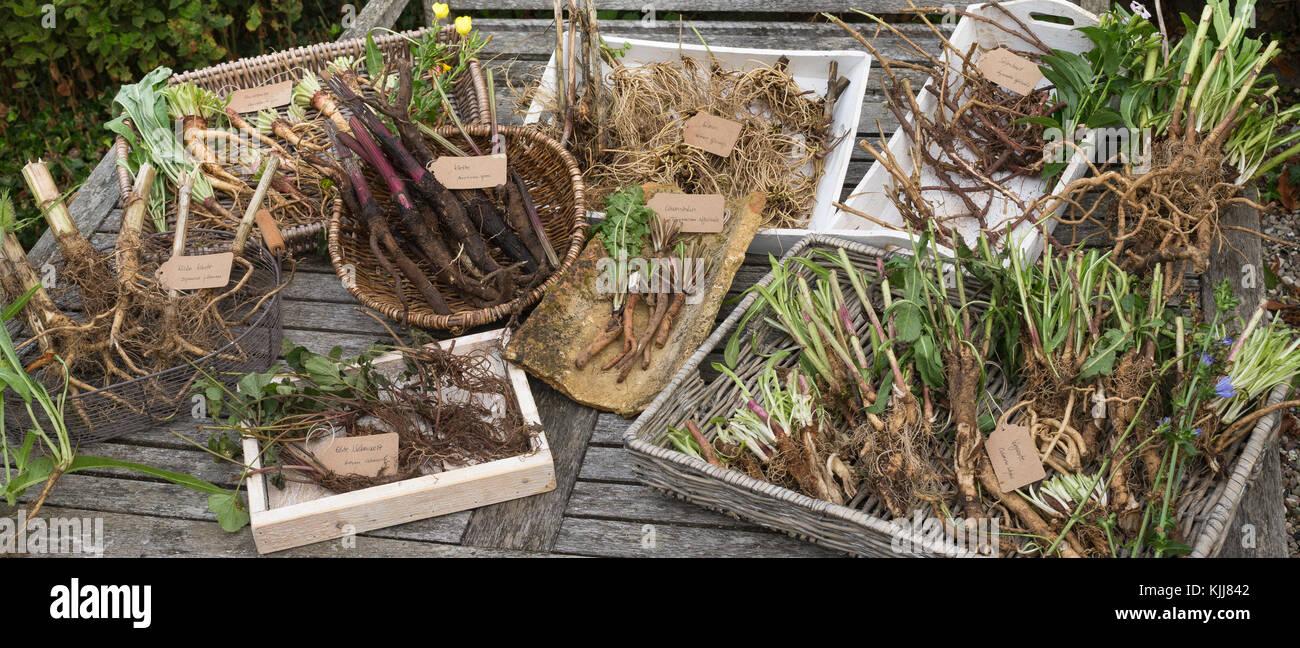 Wurzel Ernte Wurzelernte Im Herbst Wurzel Wurzeln Root Roots