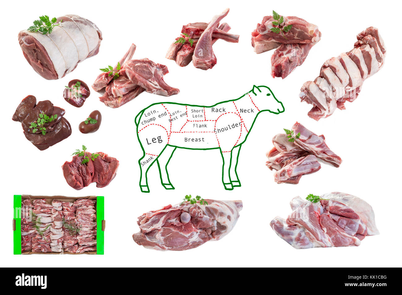 Whole Drawing Mutton In Piece And Raw Pieces Of Lamb Meat On White Background