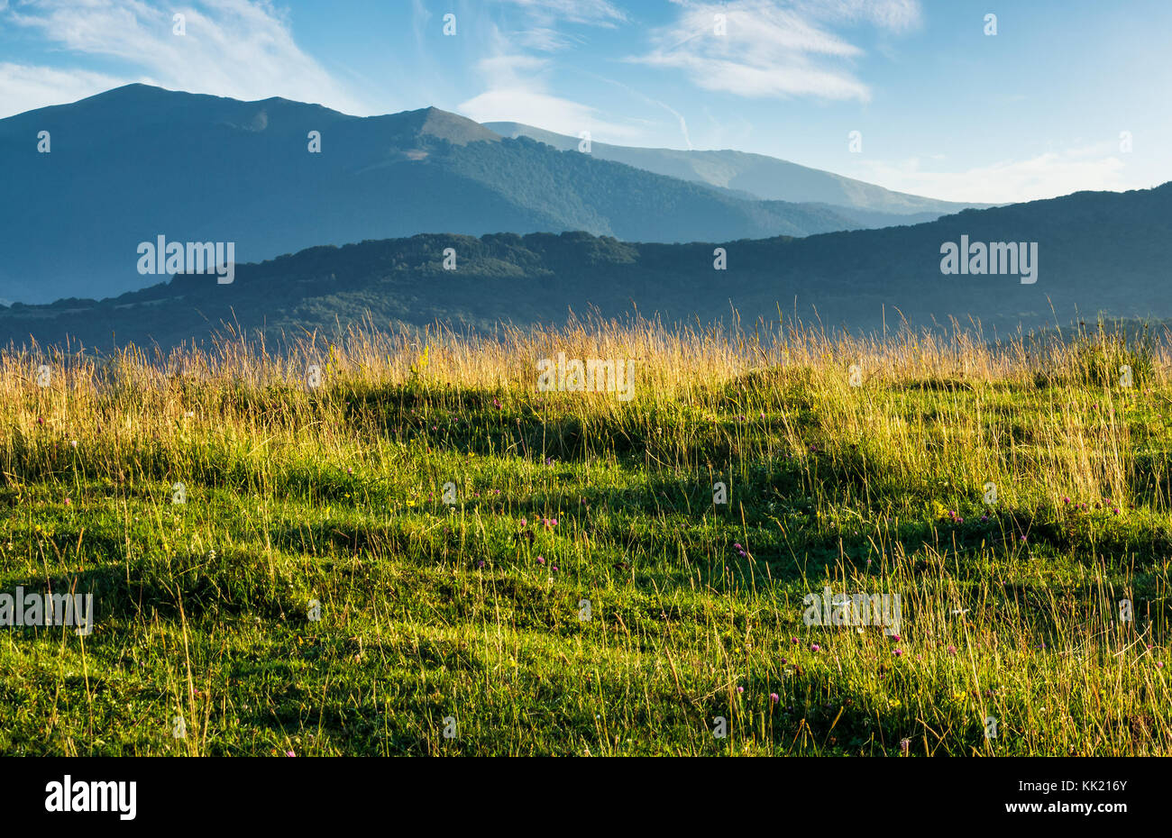 Summer scenery of grassy field in mountains mountain ridge with summer scenery of grassy field in mountains mountain ridge with high peaks in the far distance beautiful nature of carpathians voltagebd Images