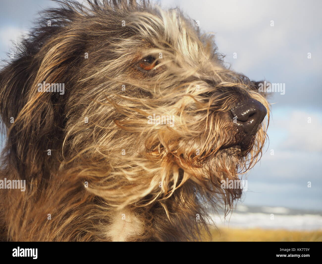 Simple Fur Brown Adorable Dog - portrait-of-a-mixed-breed-cute-dog-with-long-brown-fur-standing-against-KK773Y  Perfect Image Reference_914076  .jpg