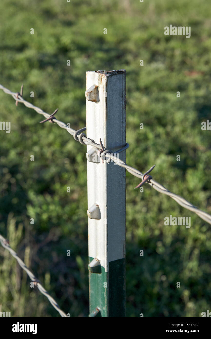 wire farm fence. Close Up Detail Of A Barbed Wire Farm Fence With Metal Posts Forming The Boundary Livestock Paddock