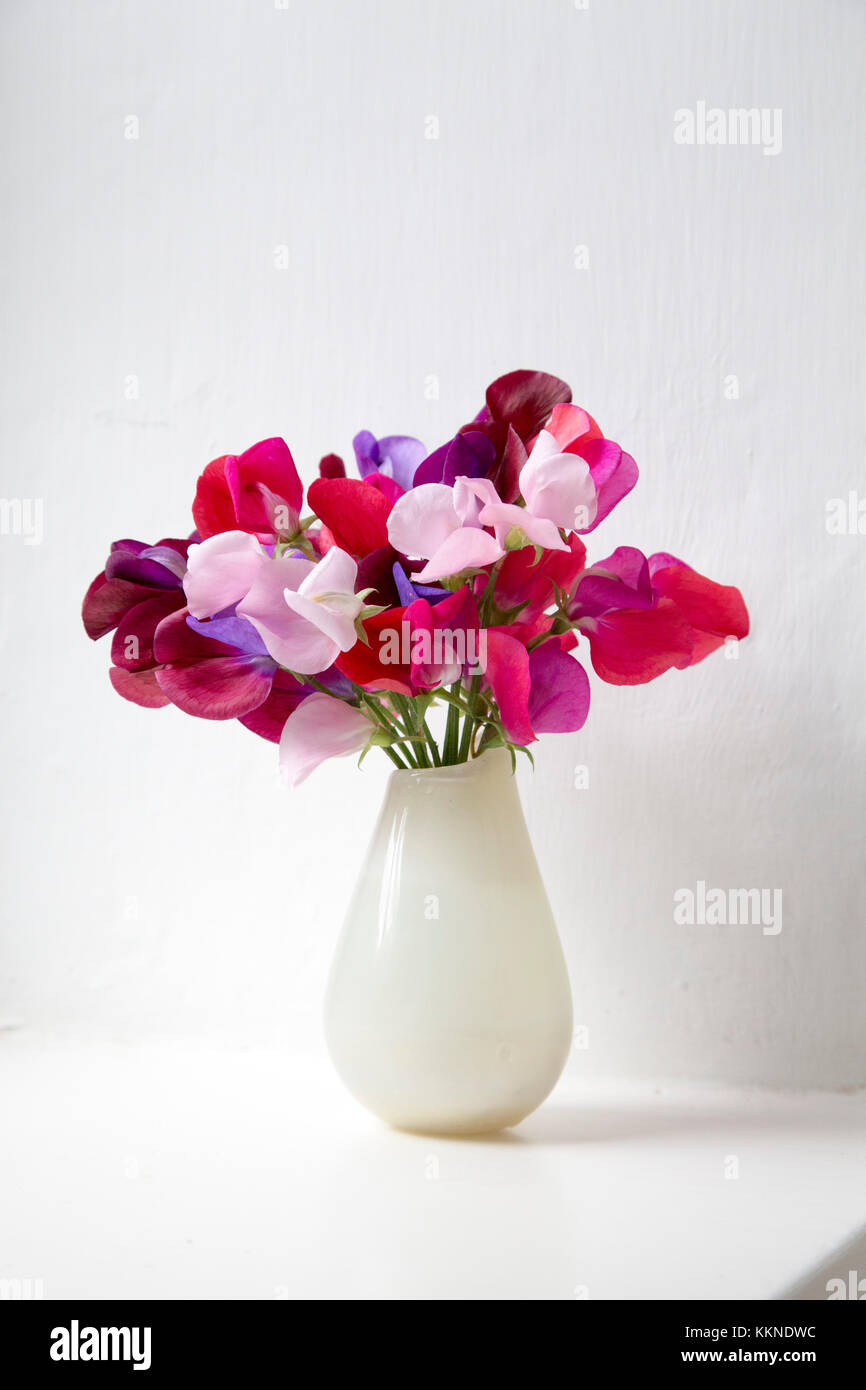 Sweet peas vase stock photos sweet peas vase stock images alamy flowering sweet peas lathyrus odoratus from the garden in a vase on a white reviewsmspy