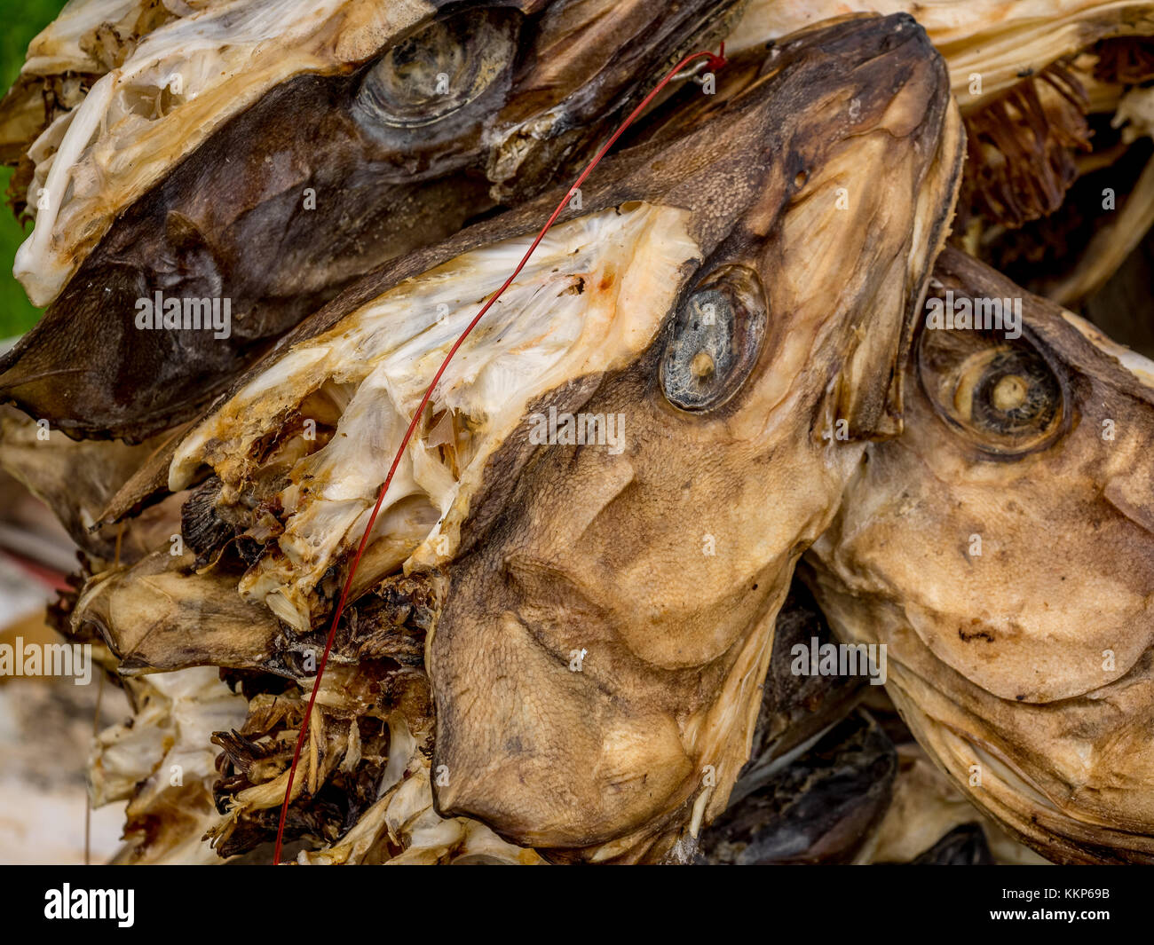 Norway fish hanging dry on stock photos norway fish for Salted cod fish near me