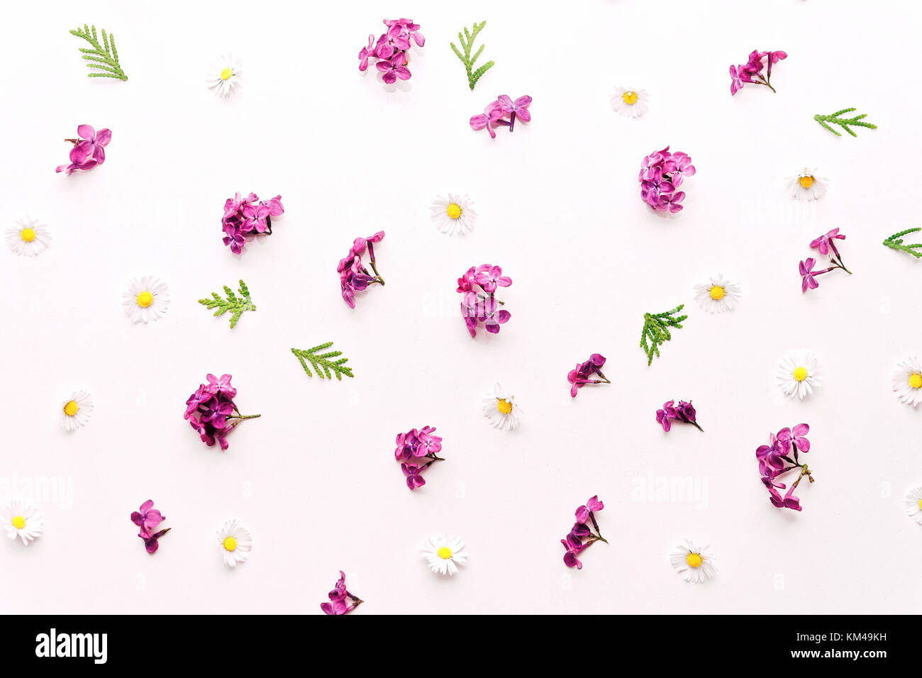Pattern With Daisy And Violet Lilac Flowers On The White Background