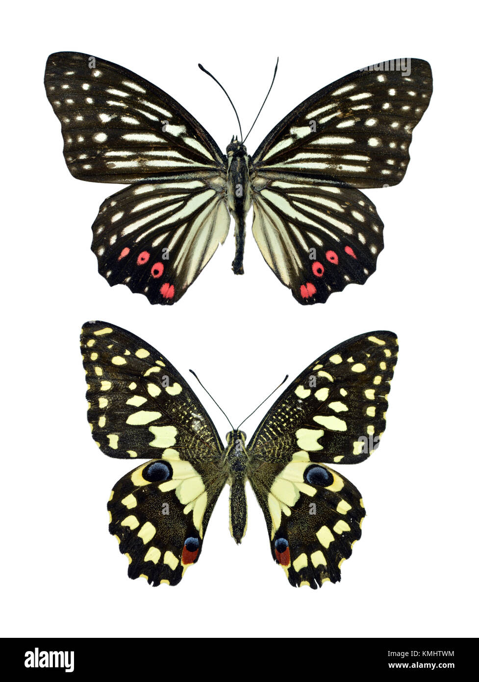 Collection of beautiful exotic colorful butterflies isolated on ...