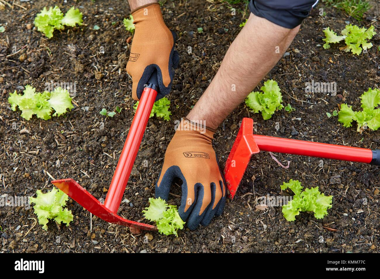 Hand cultivator stock photos hand cultivator stock for Vegetable garden tools