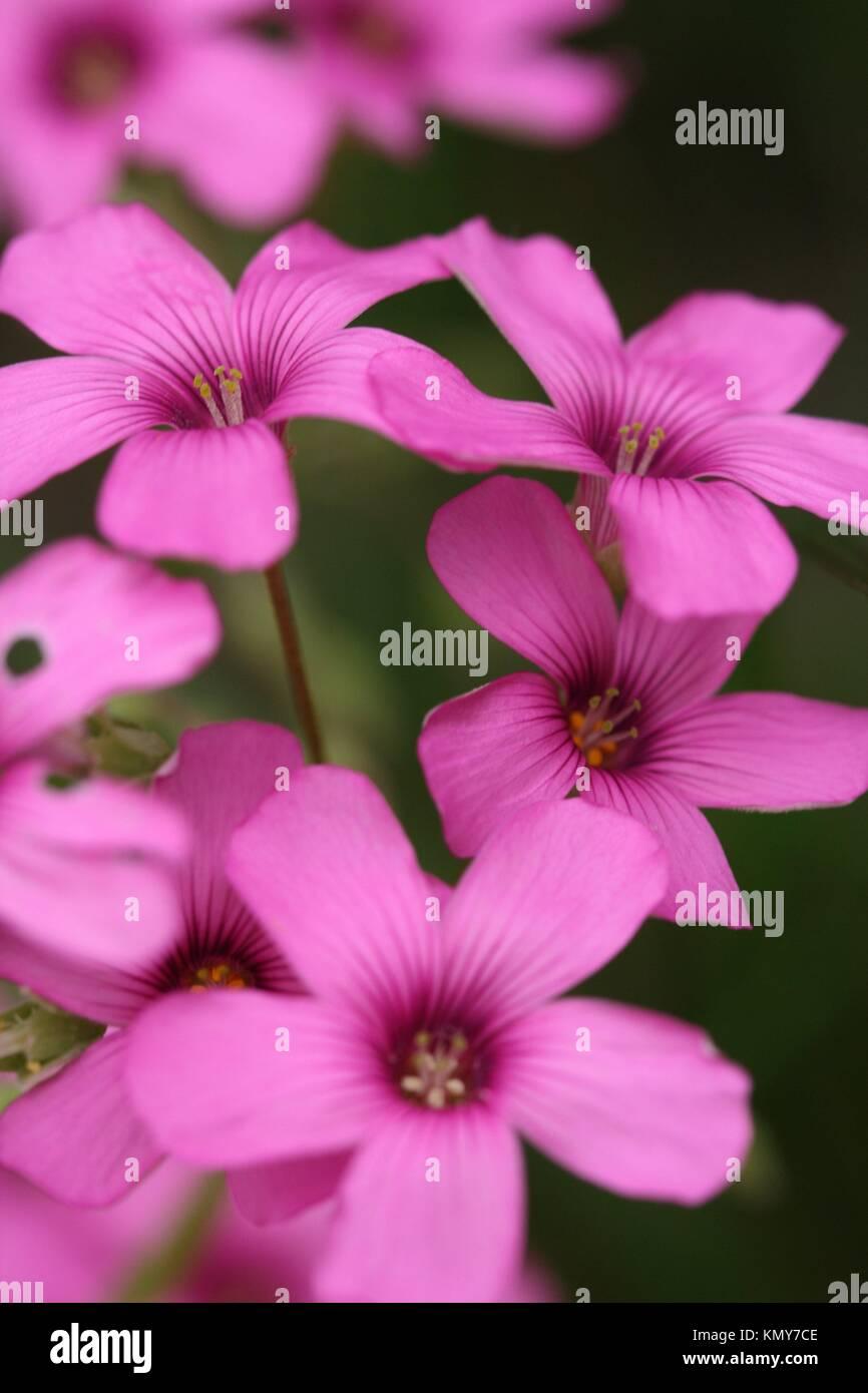 plante vivace stock photos plante vivace stock images alamy. Black Bedroom Furniture Sets. Home Design Ideas
