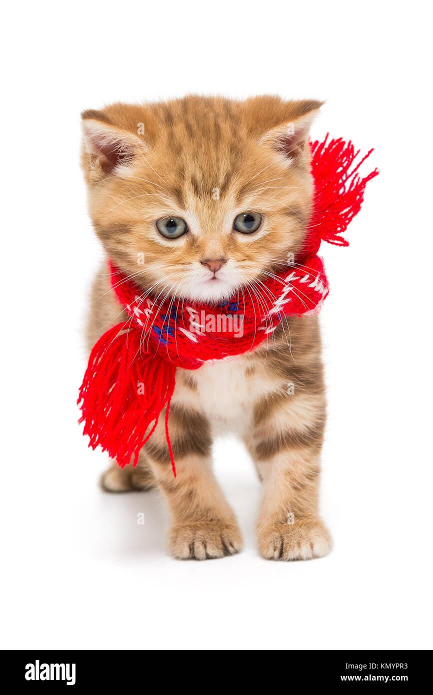 Kitten Scarf Stock s & Kitten Scarf Stock Alamy