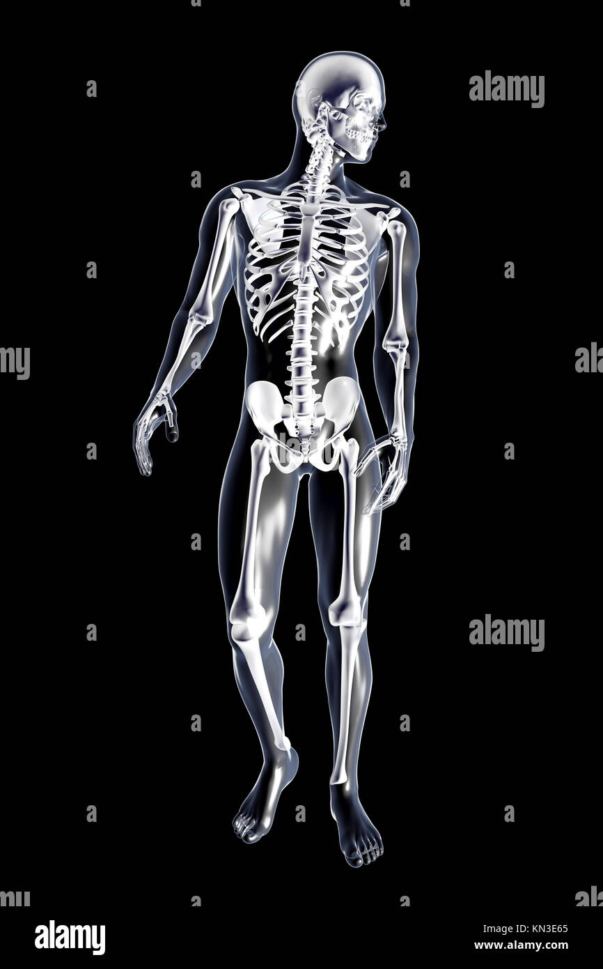 Male anatomy. 3D rendered illustration. Isolated on black Stock ...
