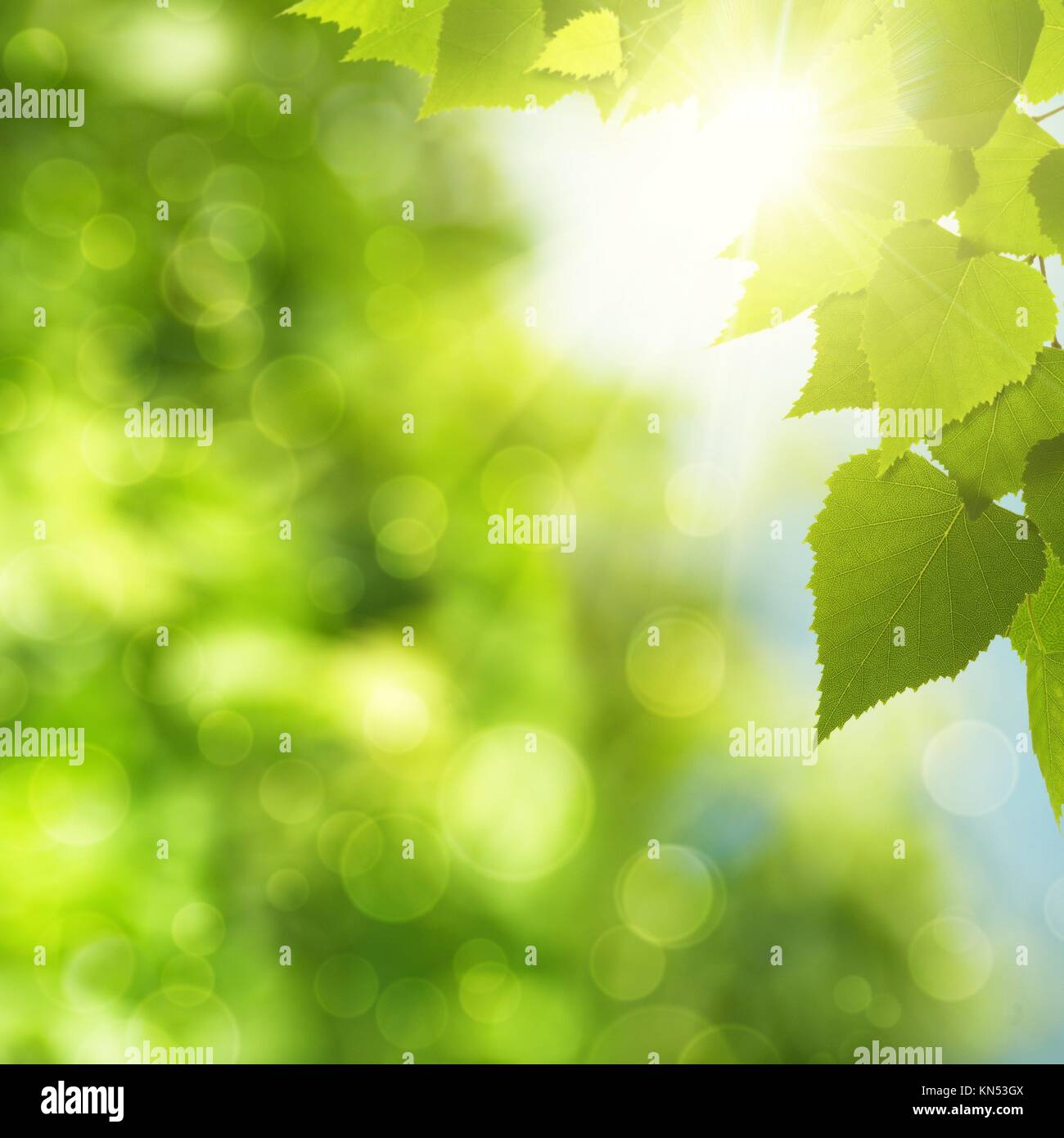 abstract natural backgrounds with green foliage and sun beam stock
