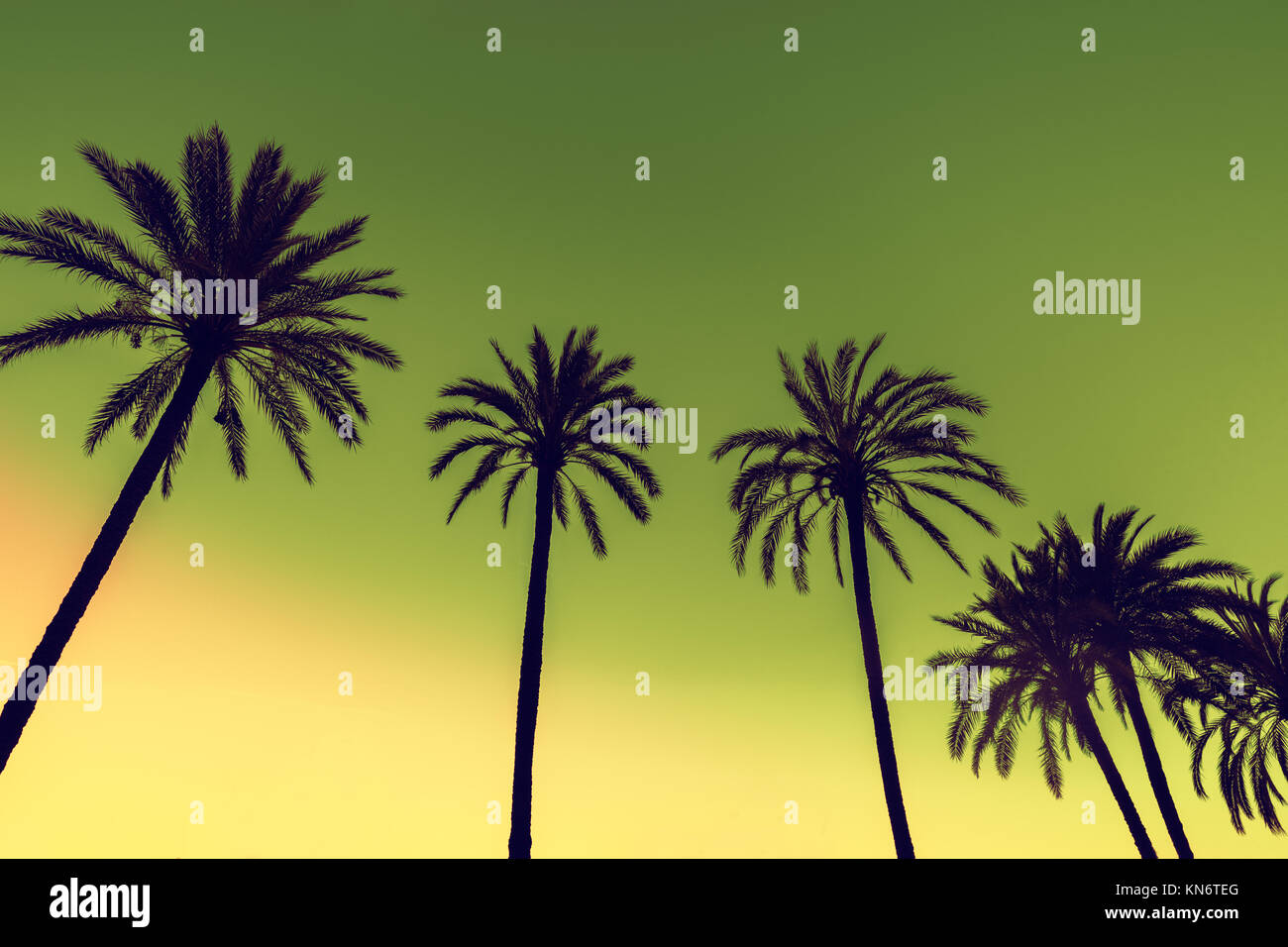 Palm Trees Against Pink Sky Stock Photos & Palm Trees Against Pink ...