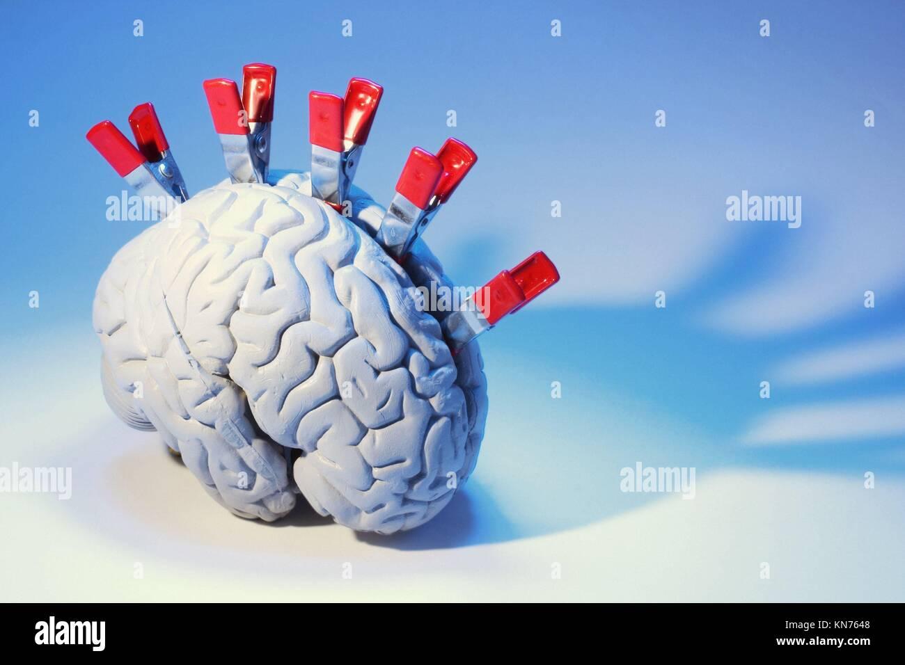 Anatomy Model of Human Brain with Clips Stock Photo: 167959576 - Alamy