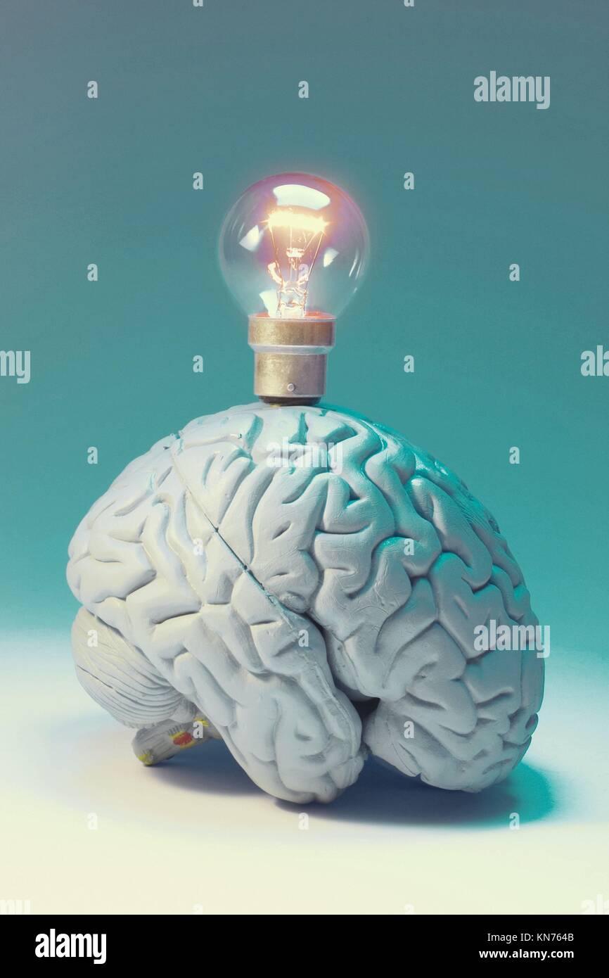 Light Bulb on Anatomy Model of Human Brain Stock Photo: 167959579 ...