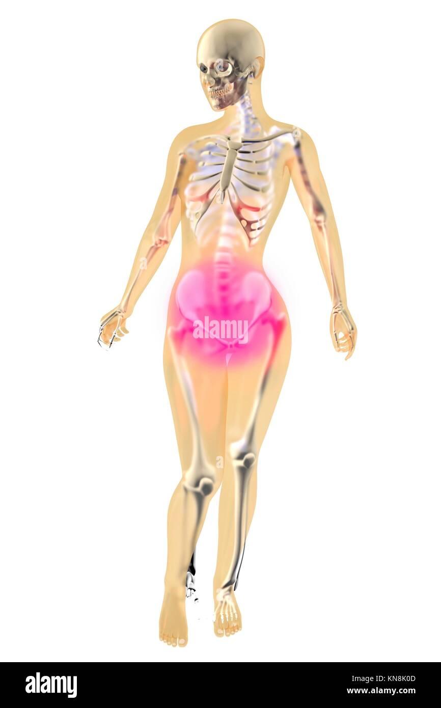 Menstrual pain. Female anatomy illustration Stock Photo: 167991613 ...
