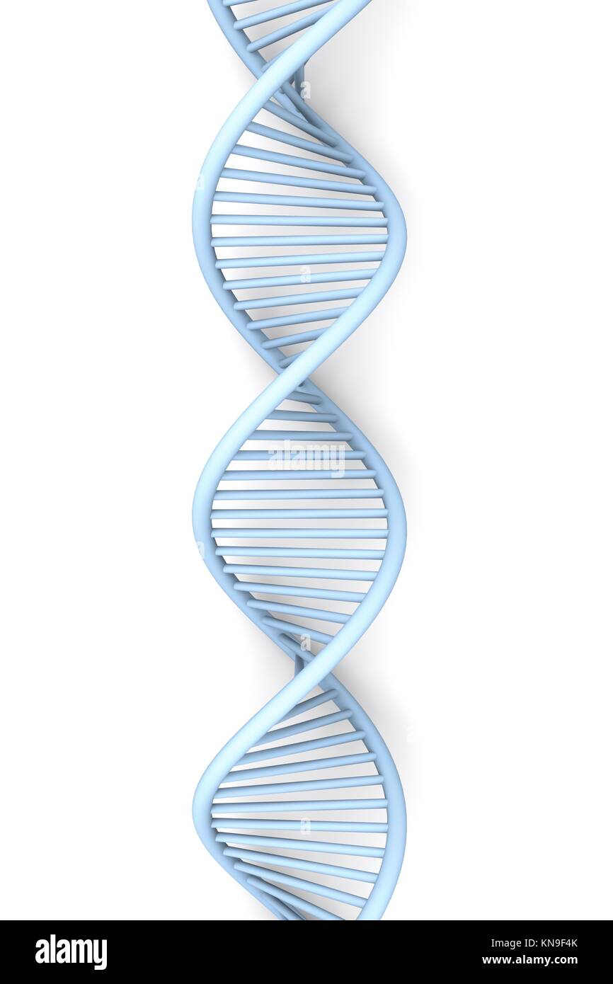Dna helix 3d isolated stock photos dna helix 3d isolated stock a symbolic dna model 3d rendered illustration isolated on white stock image ccuart Gallery