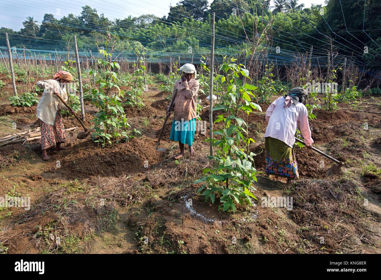 Government of Kerala  ecostatkeralagovin