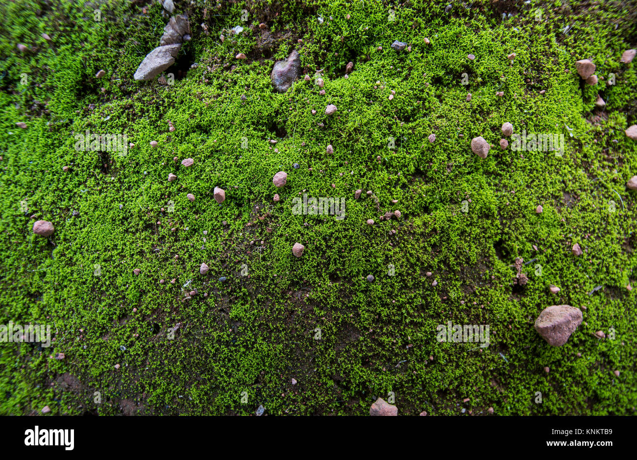 Moss texture stock photos moss texture stock images alamy for Soil and green