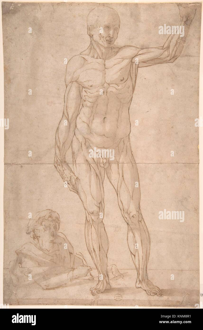 Study of Anatomy: A Youth Drawing an Ecorché of a Standing Man Stock ...