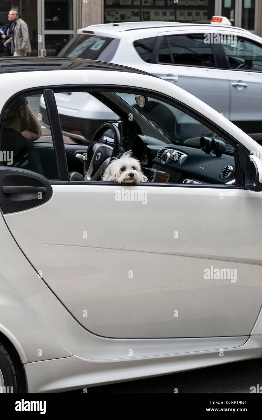 Small Car Windows : Busy dog stock photos images alamy