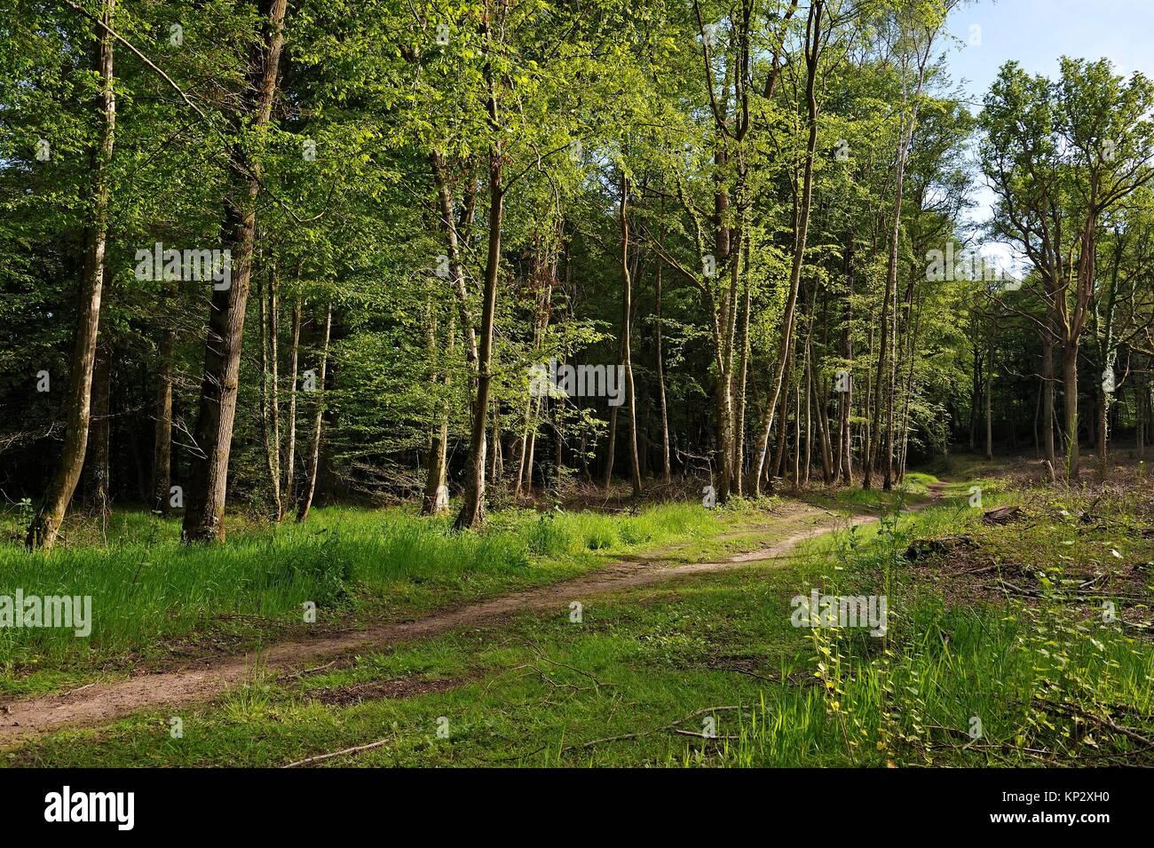 Parc de rambouillet stock photos parc de rambouillet for Parc naturel yvelines