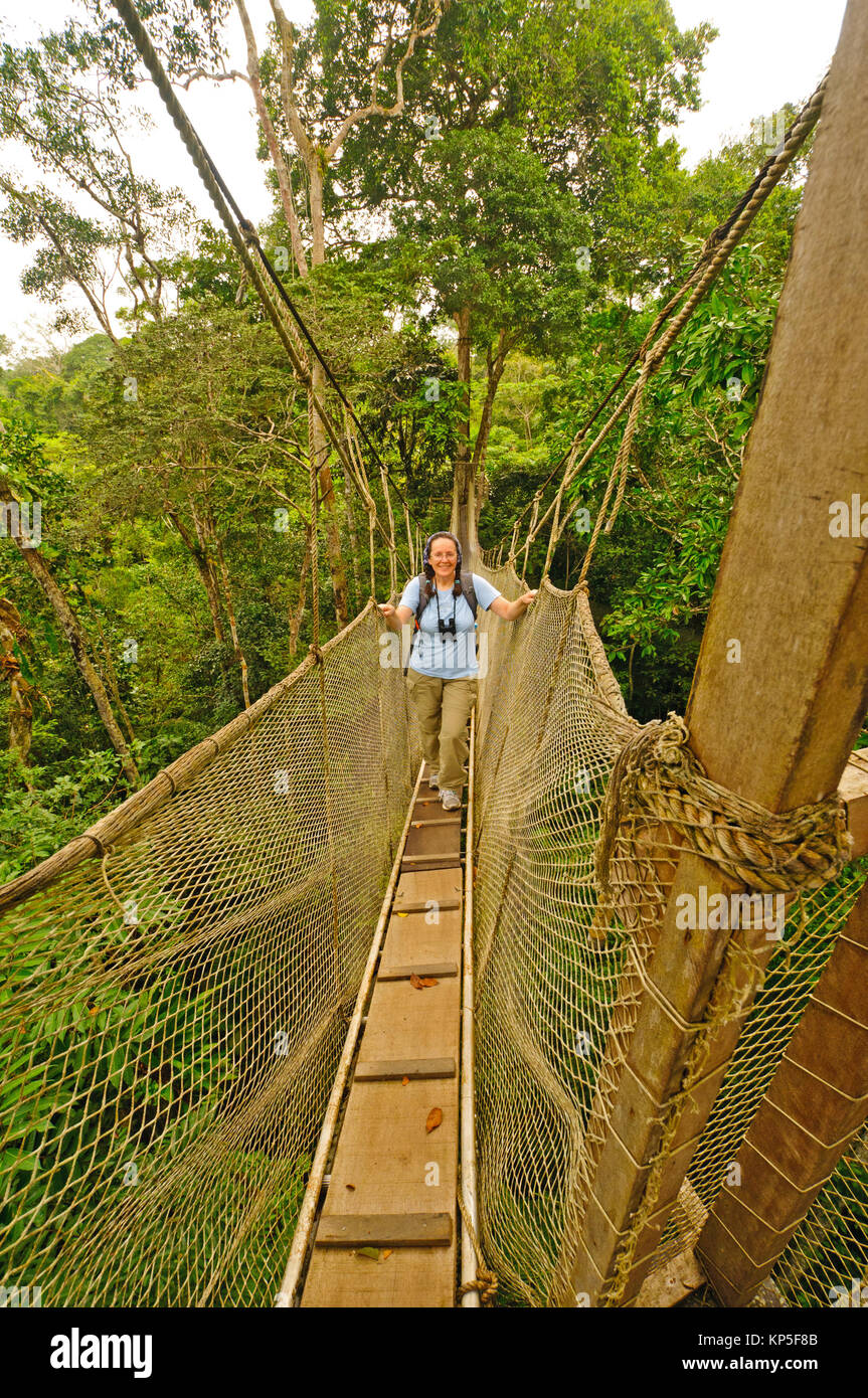 Hiker on a Canopy walkway near the Napo River in the rain forest in Peru - & Canopy Walkway Peru Stock Photos u0026 Canopy Walkway Peru Stock ...